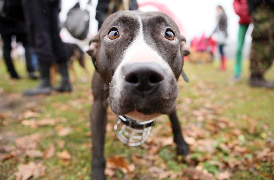 Šunų vedžiojimo aikštelė