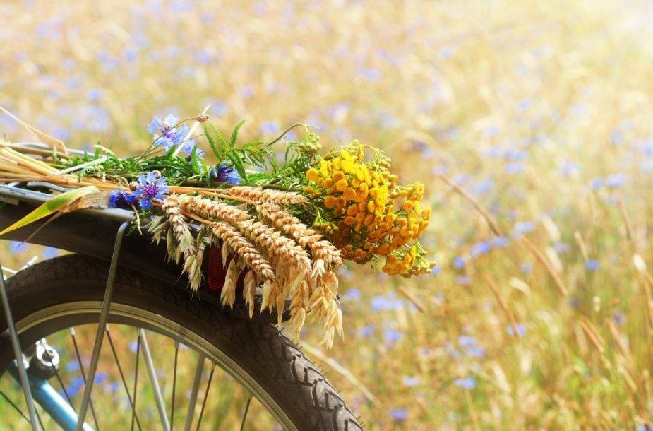 Pievos gėlės