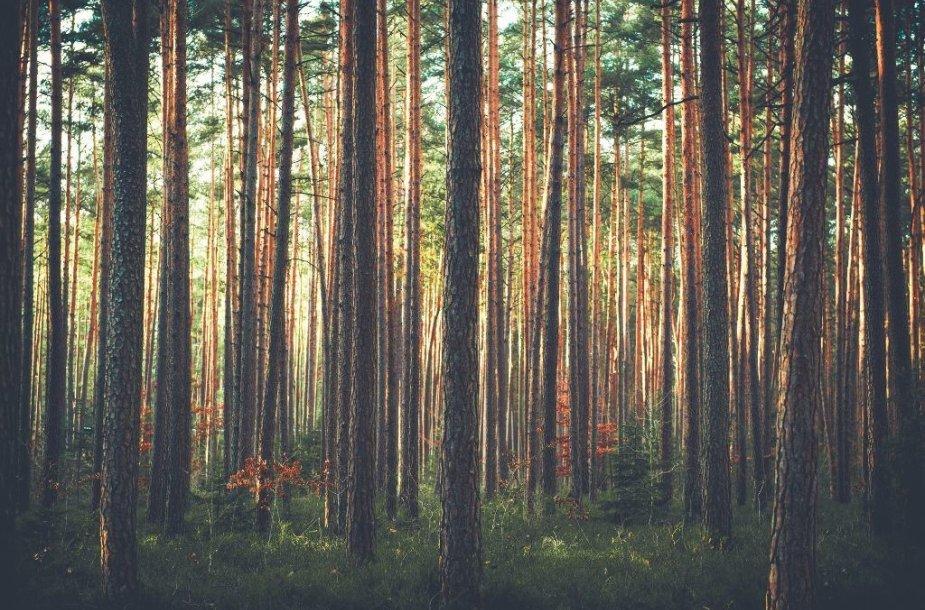 Tvarus miškų ūkis