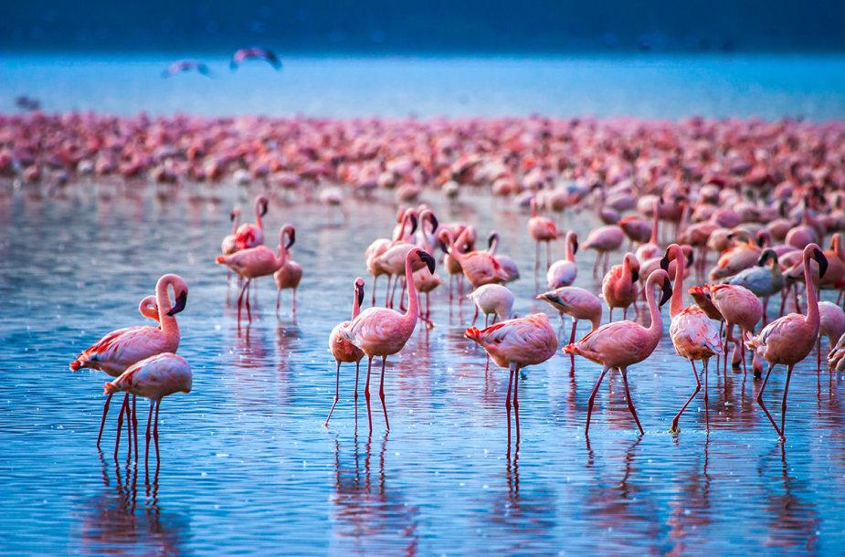 Nakuru ežero nacionalinis parkas