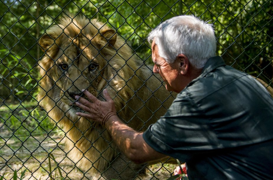 Liūtas zoologijos sode