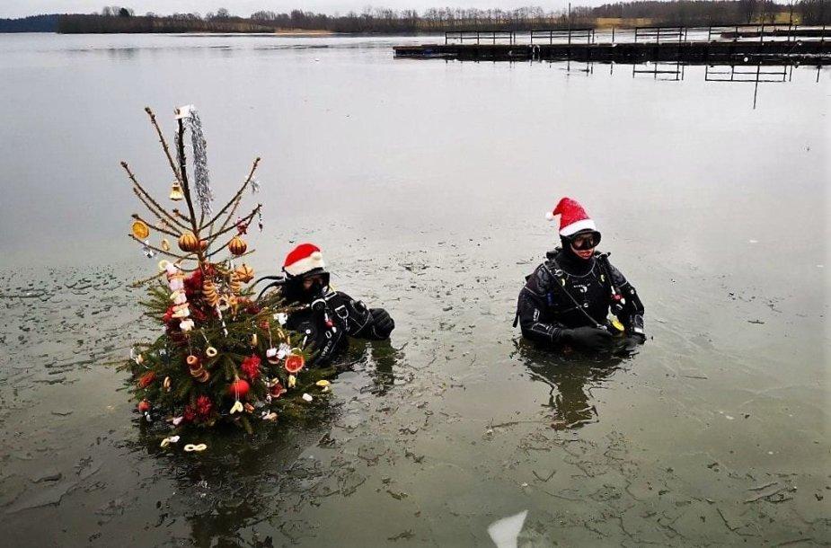 """Nardymo klubo """"Oktopusas"""" kalėdinė tradicija"""