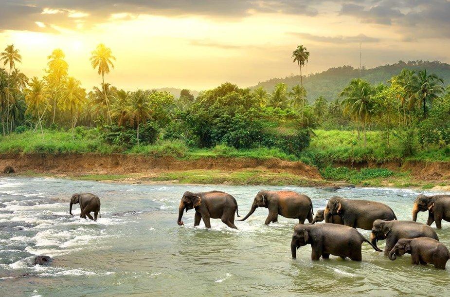 Jalos Nacionalinis Parkas Šri Lankoje