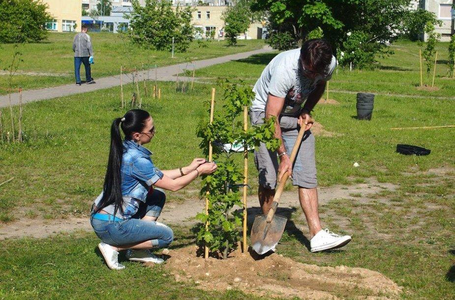 Lietuviai kviečiami sodinti milijoną ąžuolų.