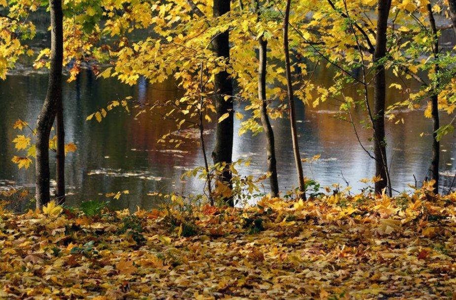 Ryškiaspalvė rudens gamta
