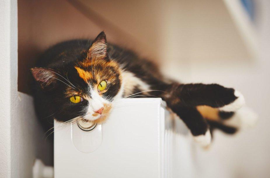 Katė šildosi