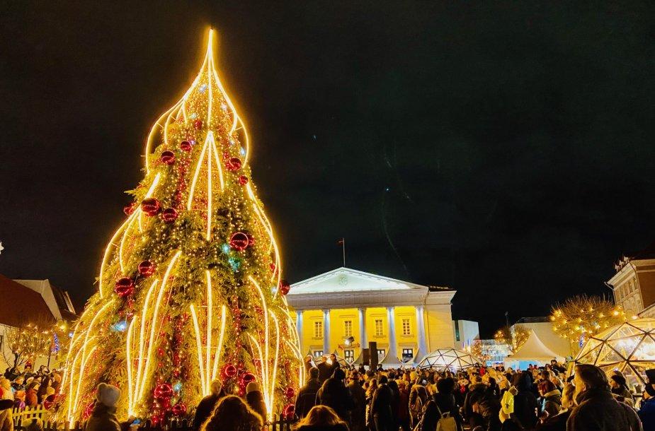 Sužibo eglė Vilniaus Rotušės aikštėje