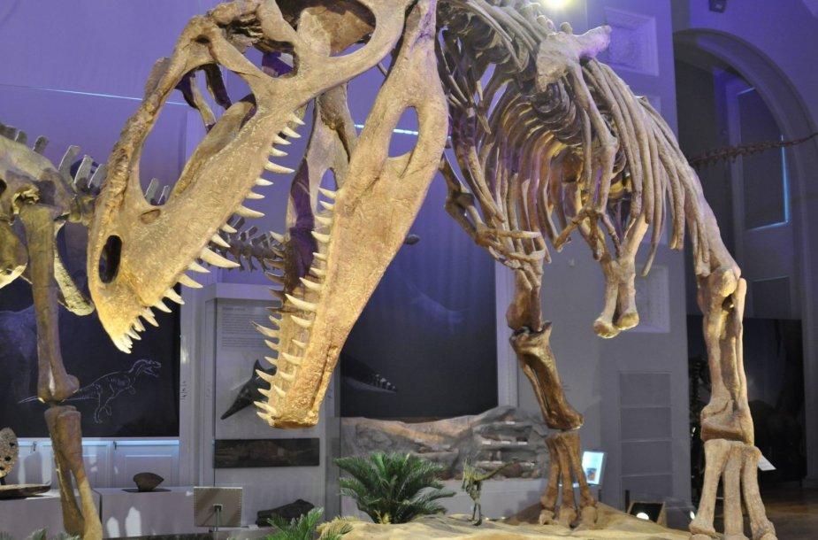Dinozauro griaučiai Helsinkio istorijos muziejuje