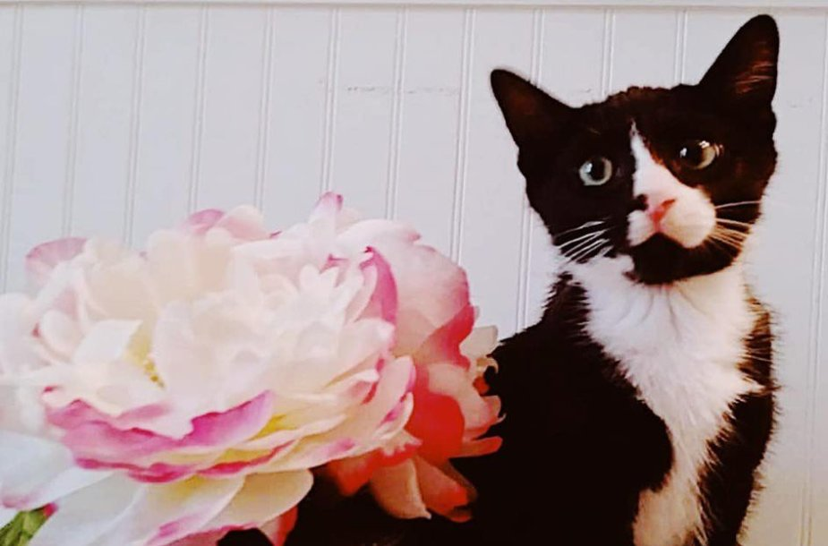 Katinas Feliksas