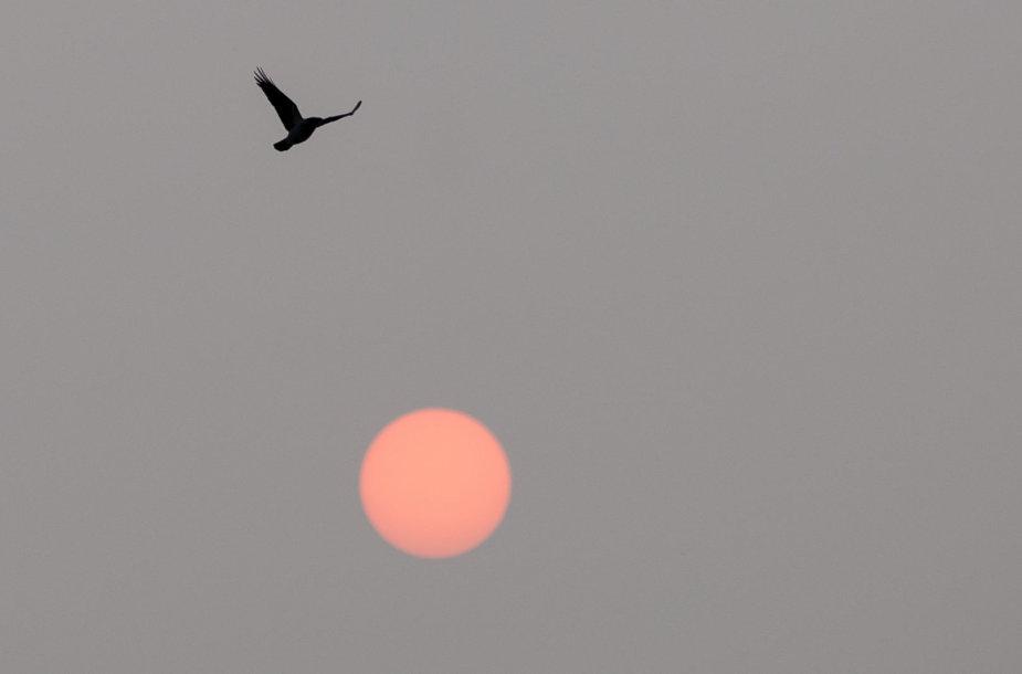 Rytinė saulė virš Vilniaus
