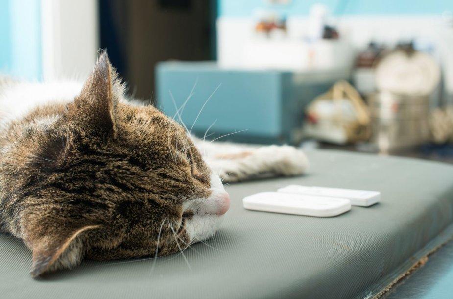 Katė veterinarijos klinikoje