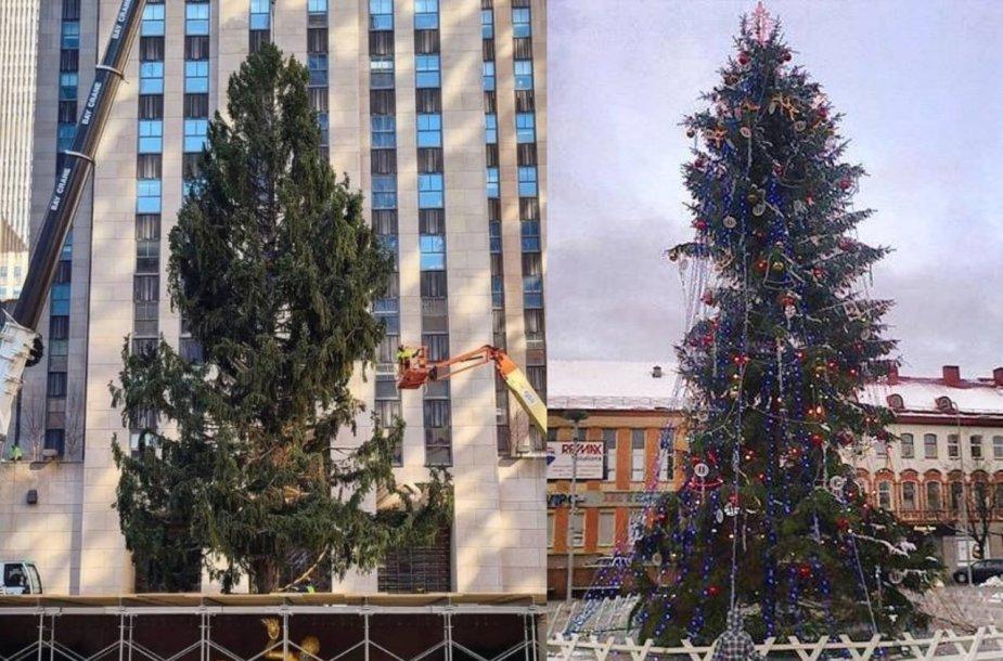 Rokfelerio centro Kalėdų eglė vos atvežta ir 2013 metų Panevėžio eglė
