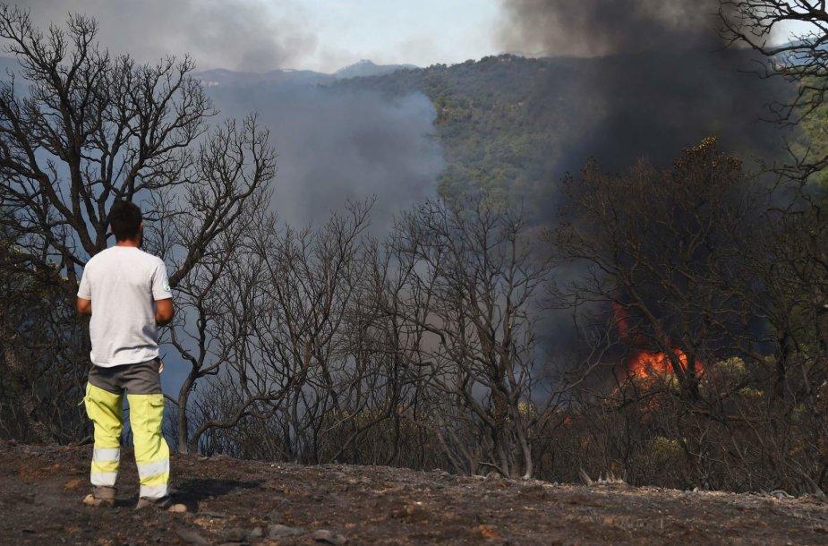 Prancūzijos ugniagesiai suvaldė vieną didžiausių miškų gaisrų