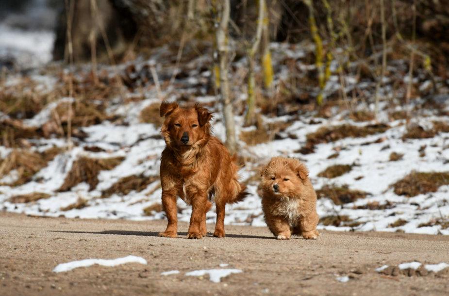 Kaimo šunys