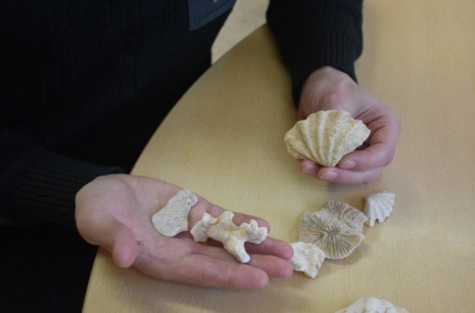 Muitininkai konfiskavo neteisėtai gabenamas jūrines kriaukles ir koralus