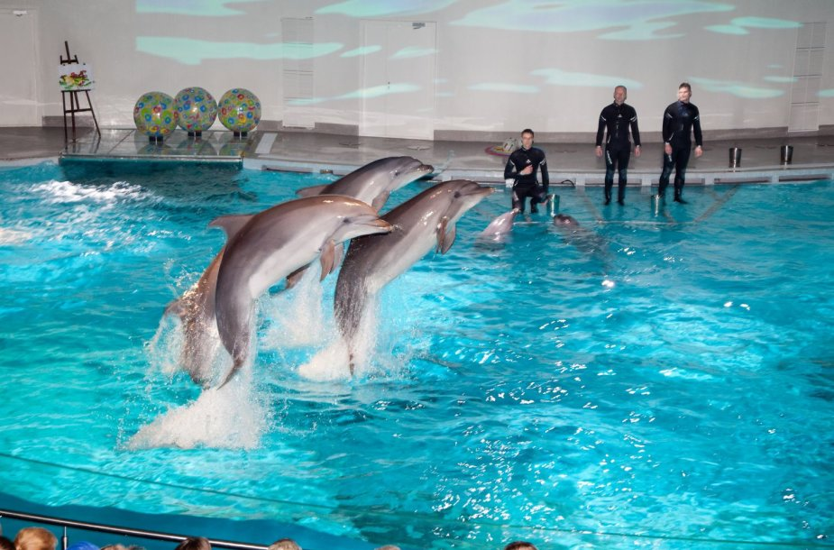 Delfinariume per dvi savaites apsilanke 7 tūkst. žmonių.