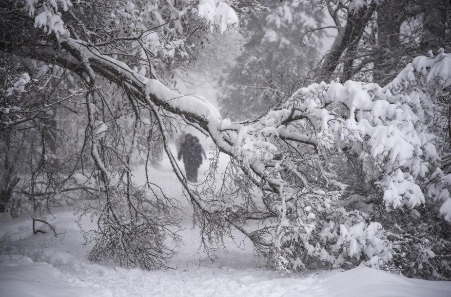 Maskvoje nuo rekordinio snygio lūžo medžiai.