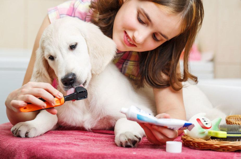 Šuo, dantukų valymas