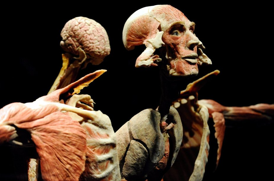 """Žmogaus kūnų paroda """"Body Worlds Vital"""""""