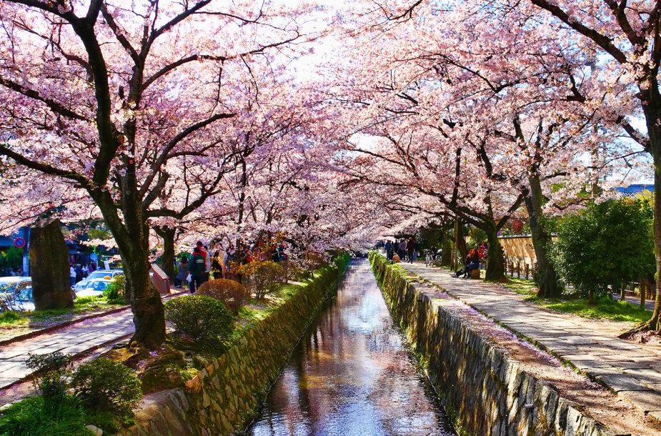 Filosofo takas Japonijoje