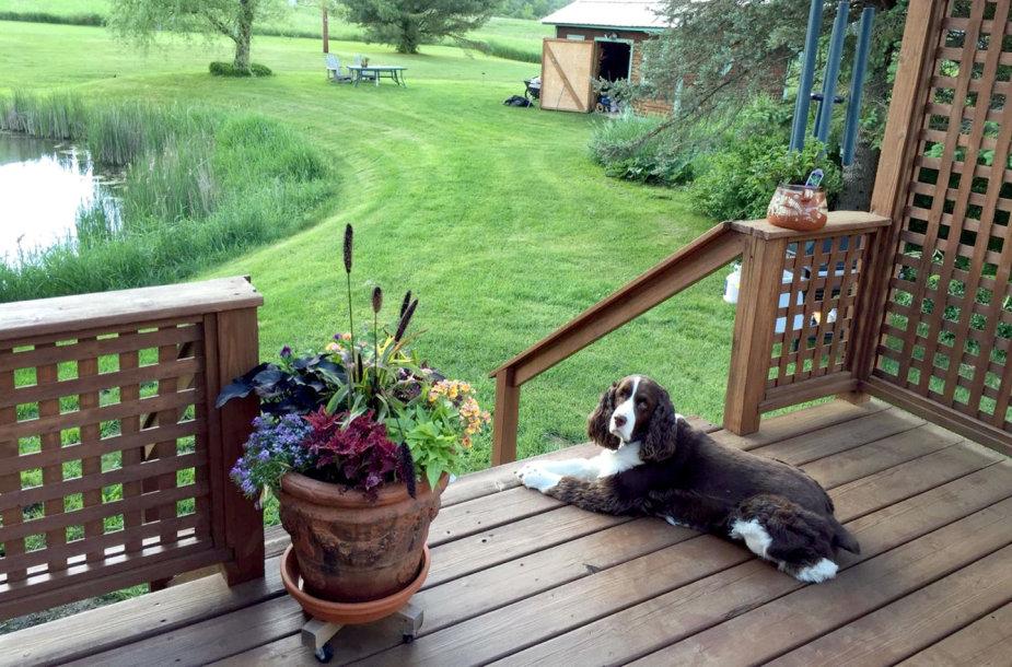 Namo prie ežero JAV augintinis. Trustedhousesitters.com siūlo gyventi namuose mainais už šeimininkų gyvūno priežiūrą