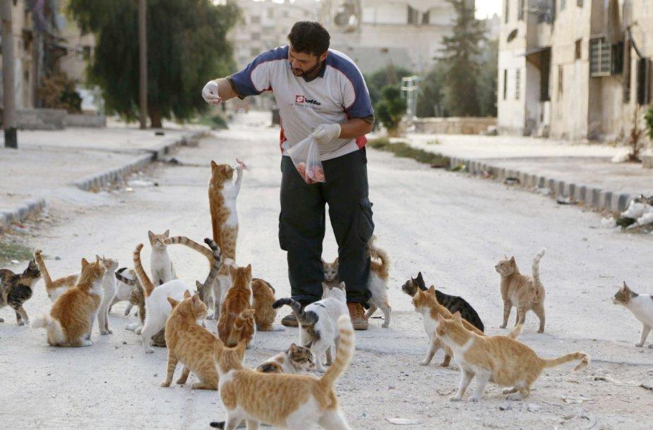 Sirijoje kates maitinantis vyras.