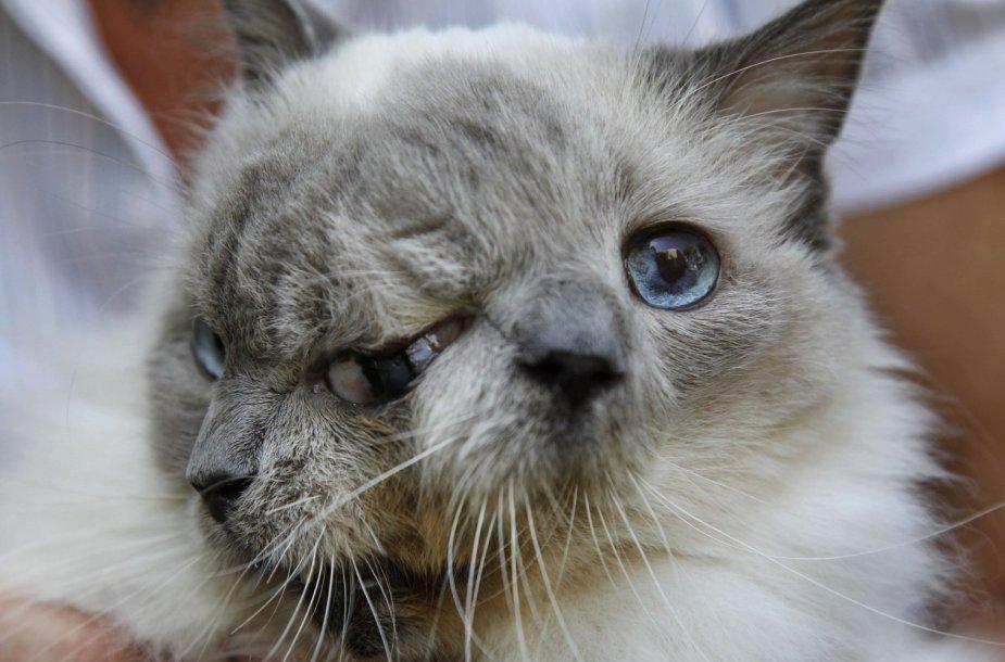 Dviveidis katinas dvigubu vardu Frankas ir Lui