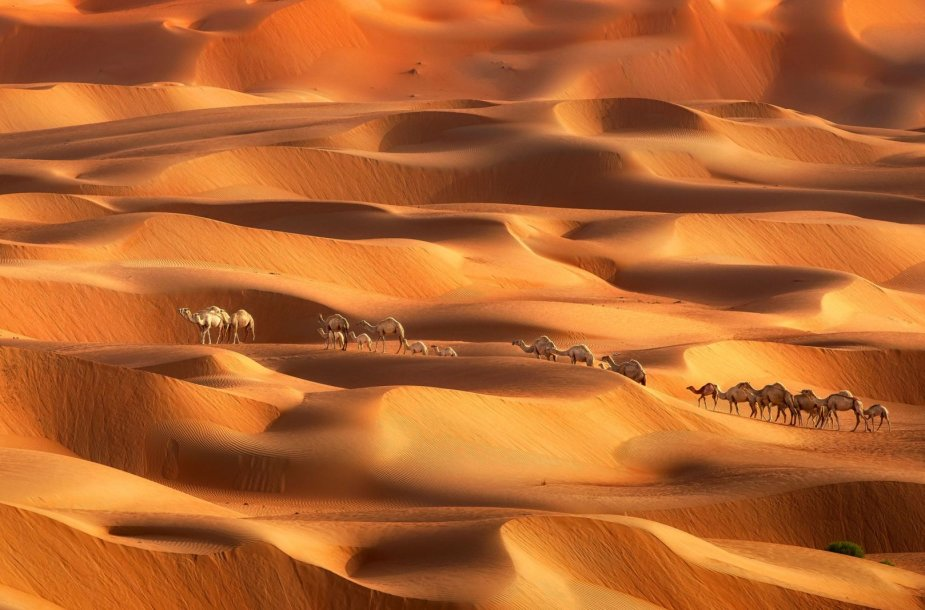 Dubajaus dykumos