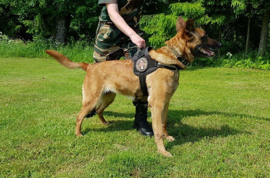 Tarnybinis šuo Hera