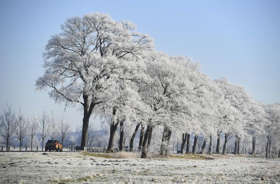 Žiemos šalčių sukaustytas pasaulis