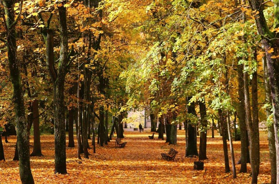 Auksinis ruduo Vilniuje