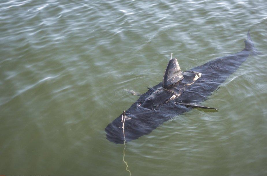 """JAV armijos šnipinėjimui sukurtas robotas – tunas """"GhostSwimmer"""""""