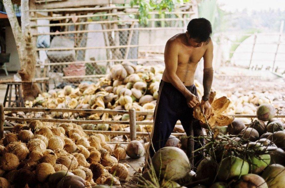 Vietnamas, Kokoso delta. Nuotrauka padaryta 2013 metais