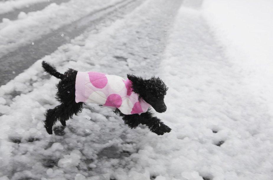 Žiema pietų Dakotoje