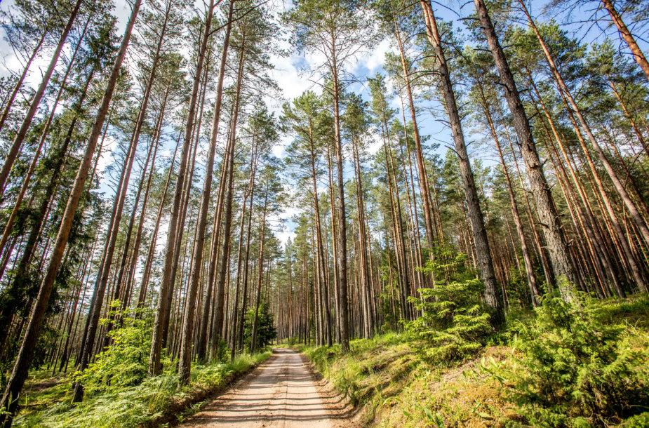 Aukštaitijos ežerai, miškai ir pievos
