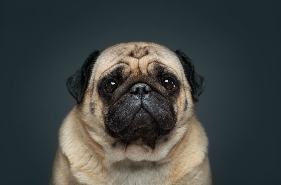 Fotografo įamžinti skirtingų nuotaikų šunų portretai