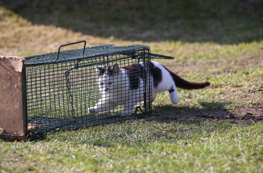 Sterilizacijai gaudomos benamės katės