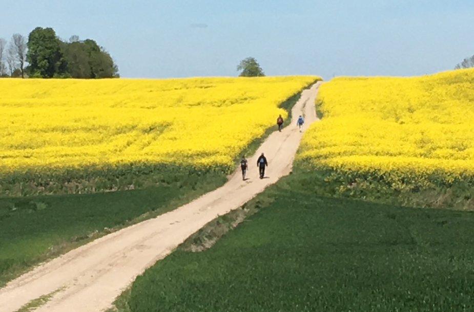 """Camino Lituano"""