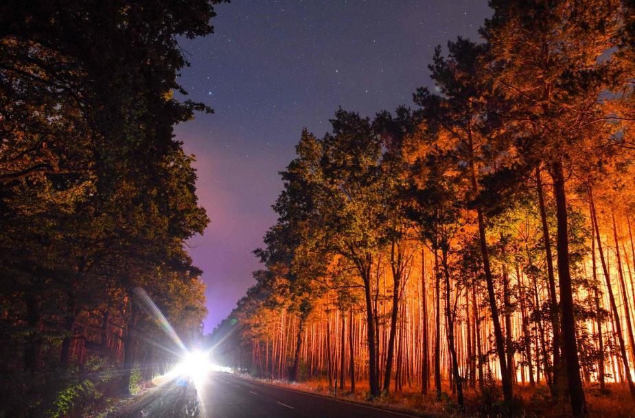 Degantys miškai prie Berlyno