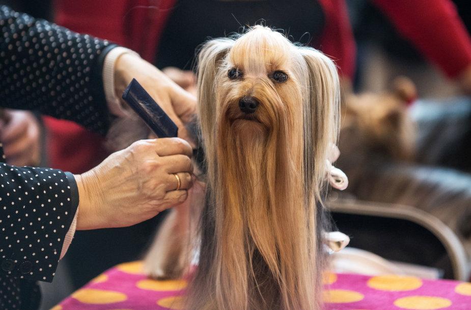 Tarptautinė šunų paroda