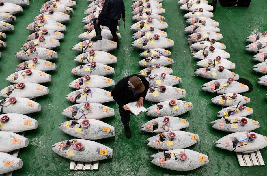 Tunai Tokijo žuvų turguje