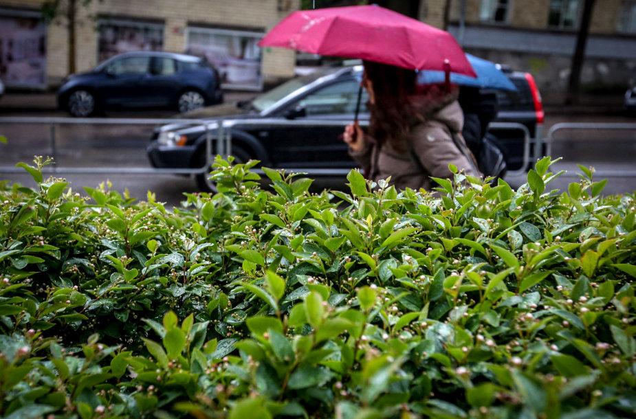 Penktadienio vakaro lietus Vilniuje