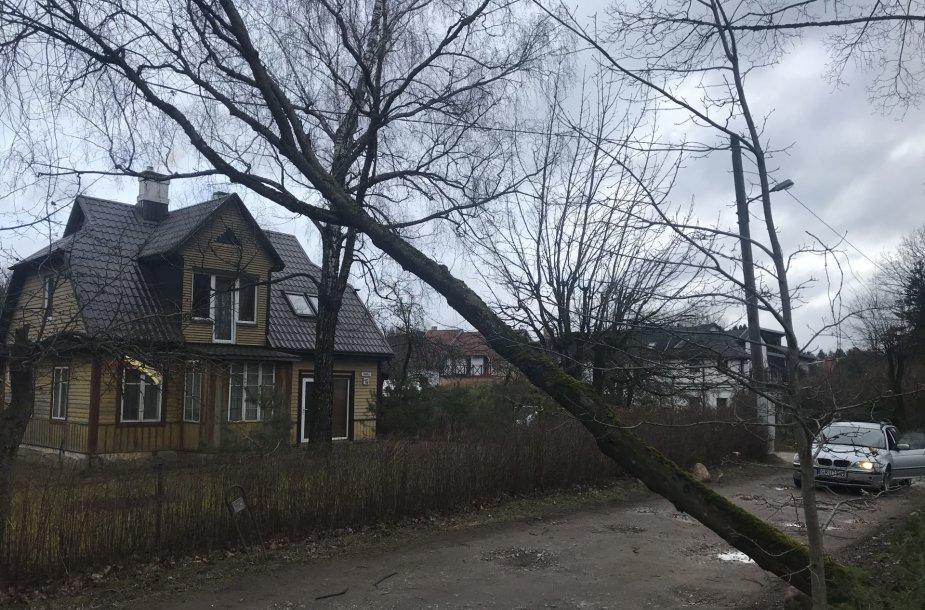 Vilniuje ant elektros laidų užvirto medis