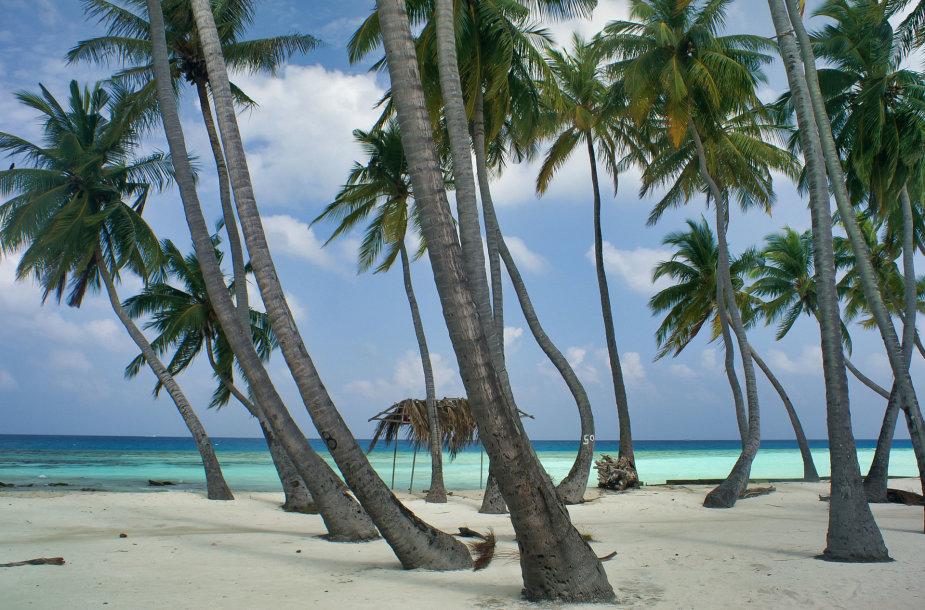Mafušis, Maldyvai