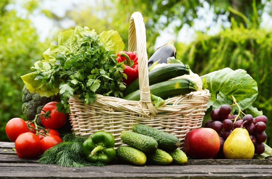 Daržovių derlius.