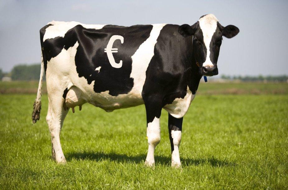 Pinigų karvė