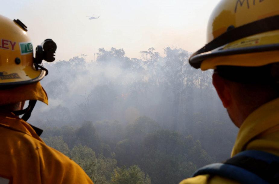 Krūmynų gaisrai Australijoje