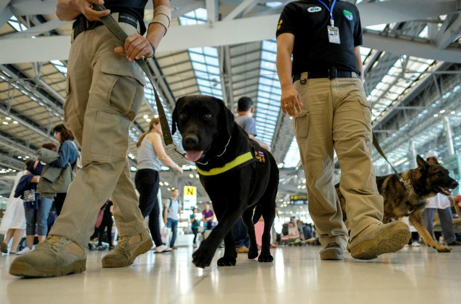 Tarnybinis šuo oro uoste