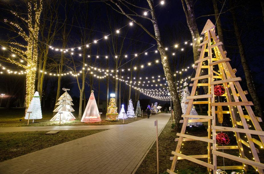 Kalėdinių medelių alėja Jonavoje