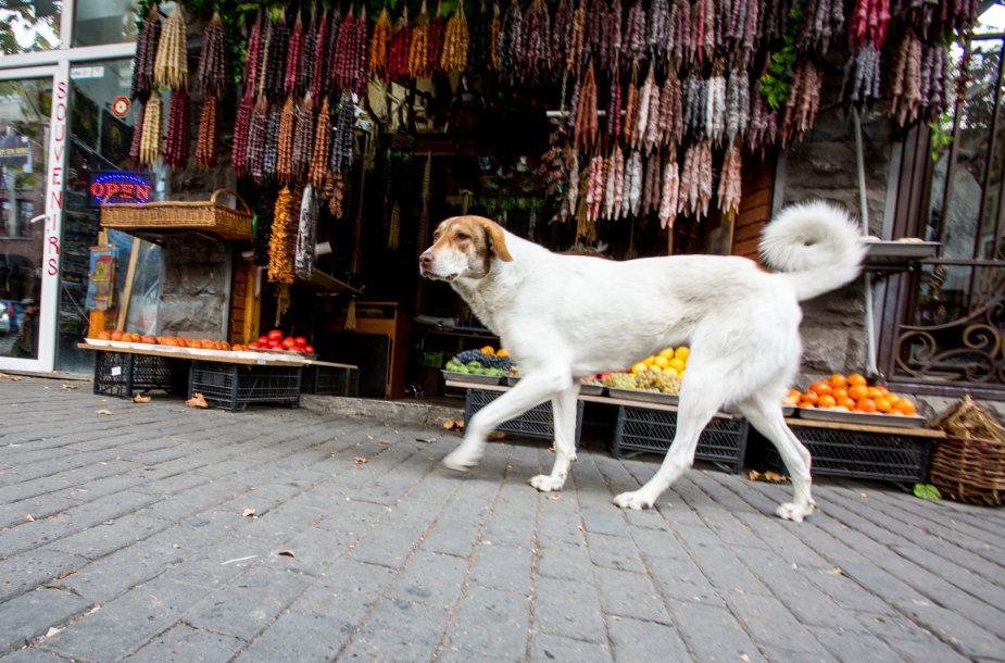 Gruzijos sostinės Tbilisio kasdienybė